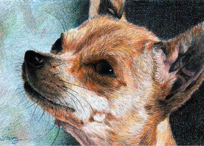 Chihuahua Greeting Card featuring the drawing Sandy by Tina Storey