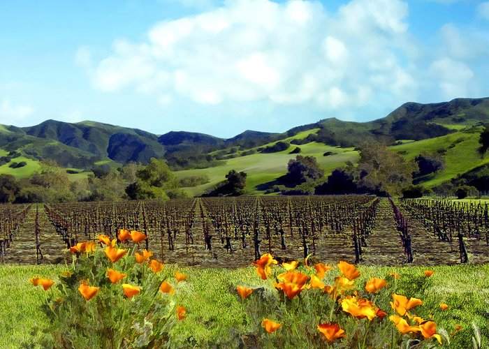 Vineyards Greeting Card featuring the photograph Sanford Ranch Vineyards by Kurt Van Wagner