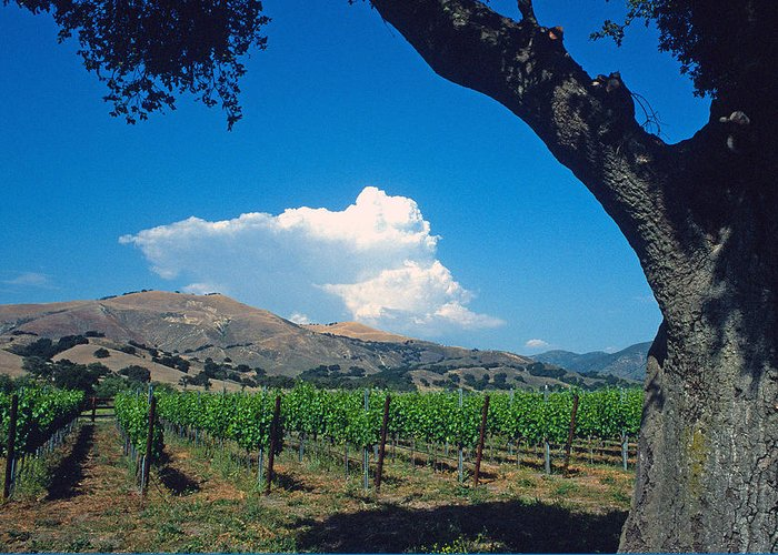 Landscape Greeting Card featuring the photograph Santa Ynez Vineyard View by Kathy Yates