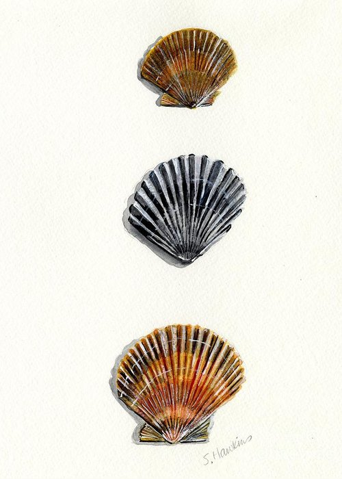 Scallop Greeting Card featuring the painting Scallop Shell Trio by Sheryl Heatherly Hawkins
