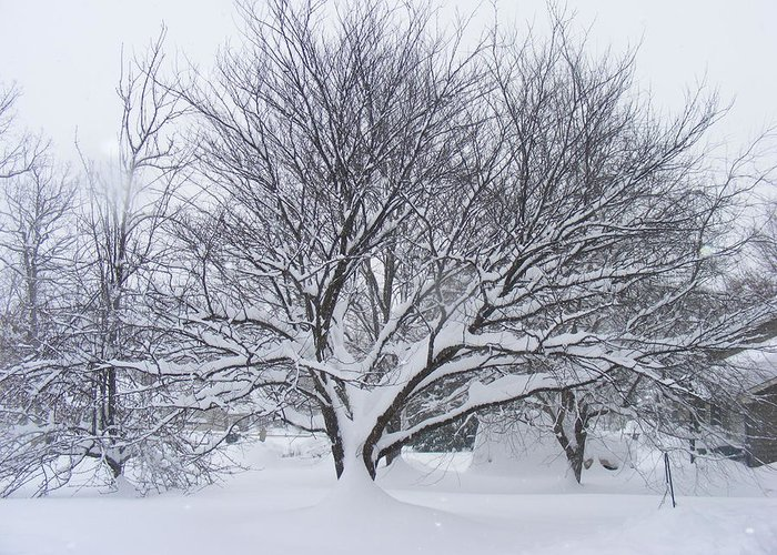 Snowstorm Greeting Card featuring the photograph Scared by James and Vickie Rankin