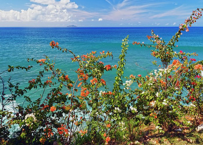 Bougainvillea Greeting Card featuring the photograph Scenic Coastal View With The Desecheo Island by George Oze