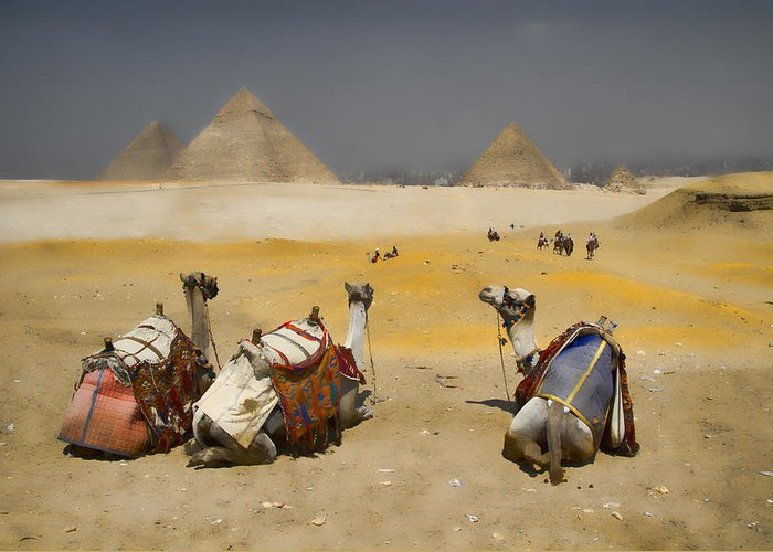 Egypt Greeting Card featuring the photograph Scenic View Of The Giza Pyramids With Sitting Camels by David Smith