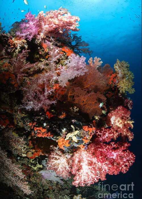 Sea Life Greeting Card featuring the photograph Sea Fans And Soft Coral, Fiji by Todd Winner