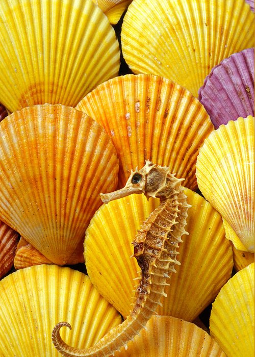 Seahorse Greeting Card featuring the photograph Sea Horse And Sea Shells by Garry Gay