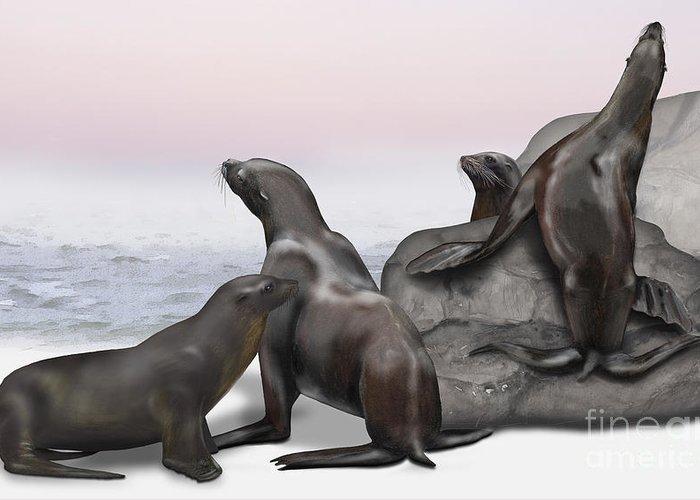 California Sea Lions Drawings Greeting Cards