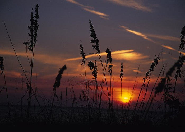Holmes Beach Greeting Card featuring the photograph Sea Oats Blow In The Breeze As The Sun by Stacy Gold