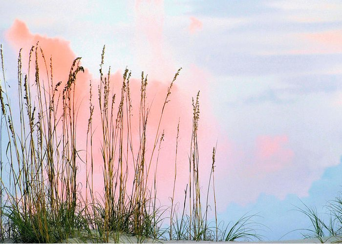 Sea Oats Greeting Card featuring the photograph Sea Oats by Kristin Elmquist