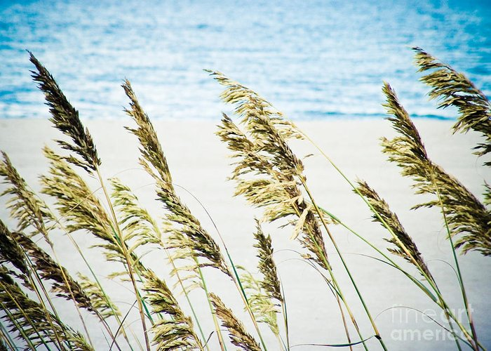 Sea Greeting Card featuring the photograph Sea Oats by Tonya Laker