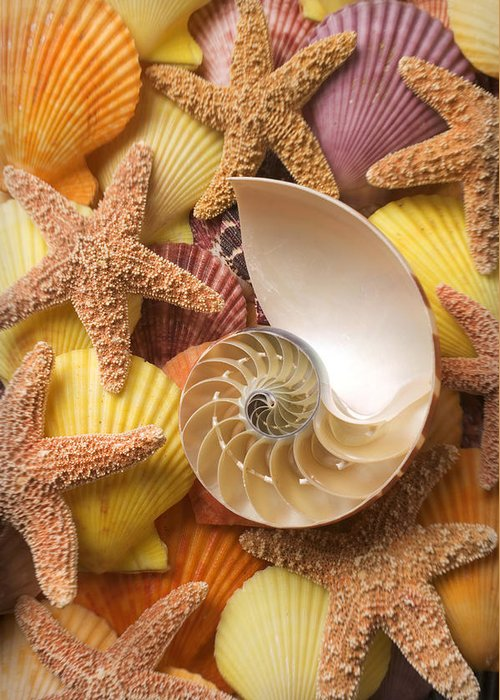 Starfish Greeting Card featuring the photograph Sea Shells And Starfish by Garry Gay