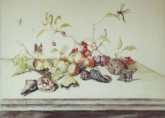 Still Life Fruit Shells Insects Greeting Card featuring the painting Sea Shells by Joseph Valencia
