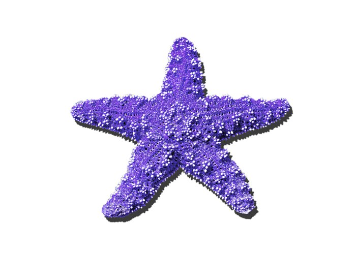 sea star purple png greeting card for sale by al powell photography usa
