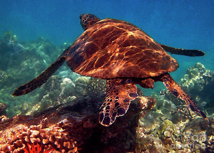 Hawaiian Green Sea Turtle Greeting Card featuring the photograph Sea Turtle On The Reef by Bette Phelan