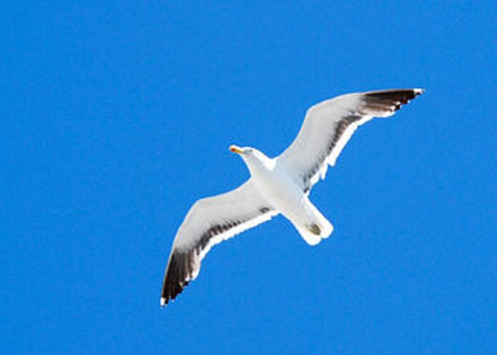 Flower Greeting Card featuring the photograph Seagull Blue by Cesar Marino