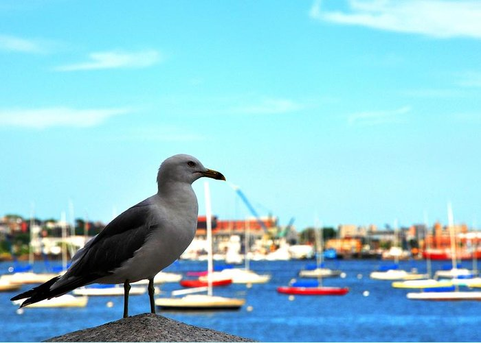 Seagull Greeting Card featuring the photograph Seagull In Boston Harbor by Andrew Dinh