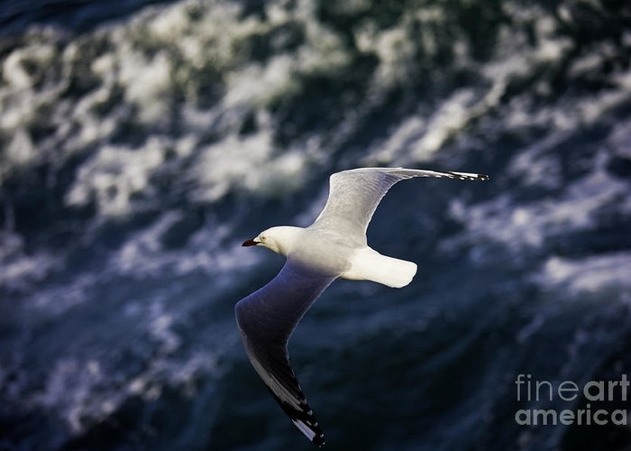 Seagull Greeting Card featuring the photograph Seagull In Wake by Sheila Smart Fine Art Photography