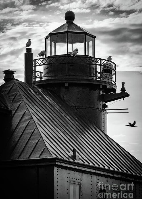 Door County Greeting Card featuring the photograph Seagull Layover by Ever-Curious Photography