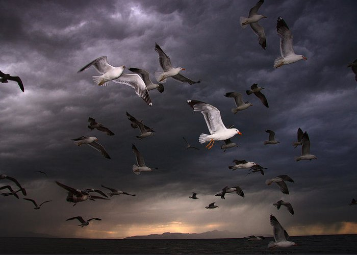 Gull Greeting Card featuring the photograph Seagull Storm by Gene Praag
