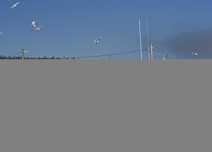 Fishing Boat Greeting Card featuring the photograph Seagulls Flying By Fishing Boat by Sven Brogren