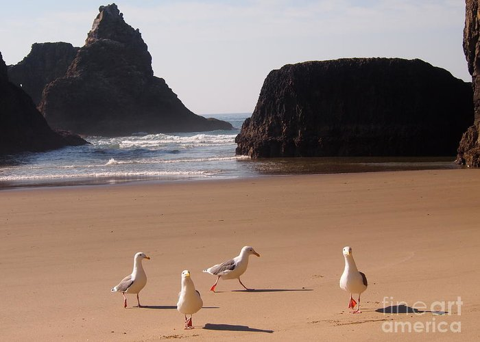 Seagulls Greeting Card featuring the photograph Seagull's Folly by Sandra Peery