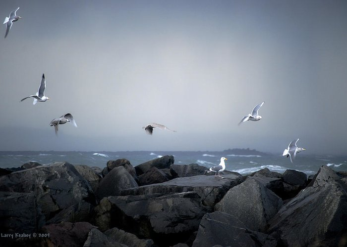 Landscape Greeting Card featuring the photograph Seagulls In Flight by Larry Keahey