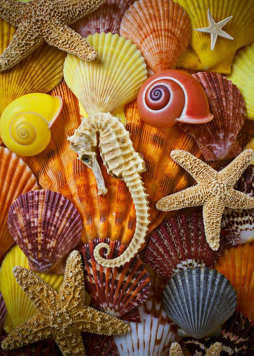 Seahorses Greeting Card featuring the photograph Seahorse And Assorted Sea Shells by Garry Gay