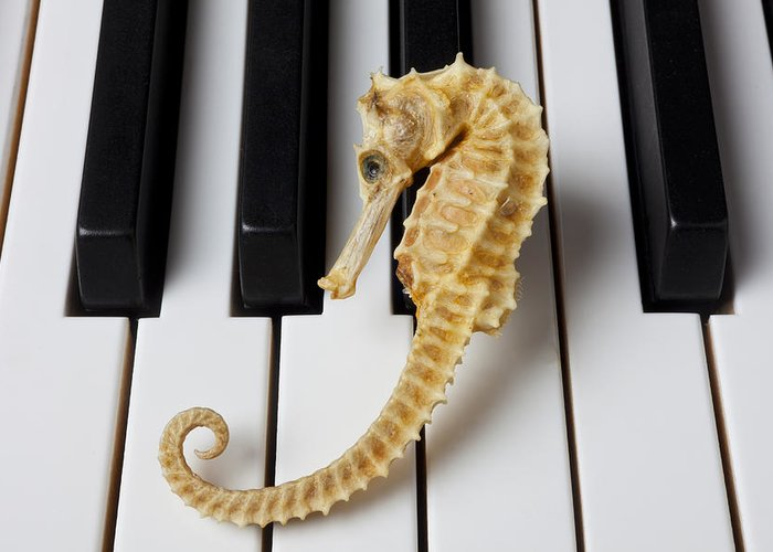 Seahorse Greeting Card featuring the photograph Seahorse On Keys by Garry Gay