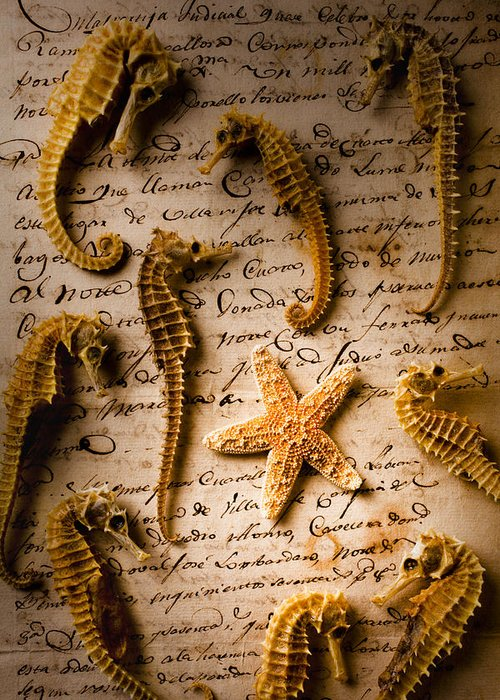Seahorses Starfish Old Letter Words Greeting Card featuring the photograph Seahorses And Starfish On Old Letter by Garry Gay