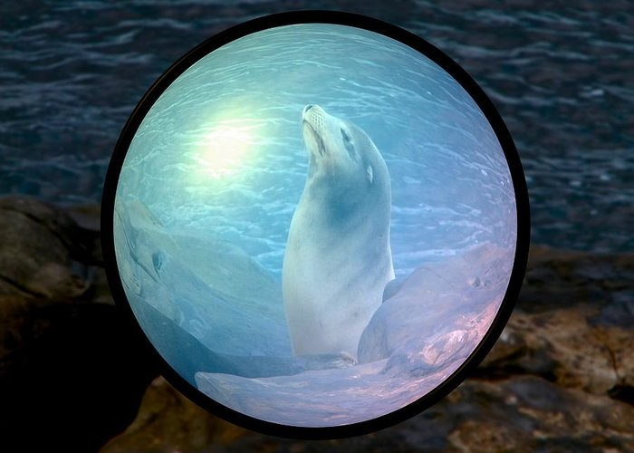 Natural Greeting Card featuring the photograph Seal by Guillermo Mason