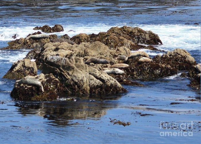 California Coast Greeting Card featuring the photograph Seal Island by Carol Groenen