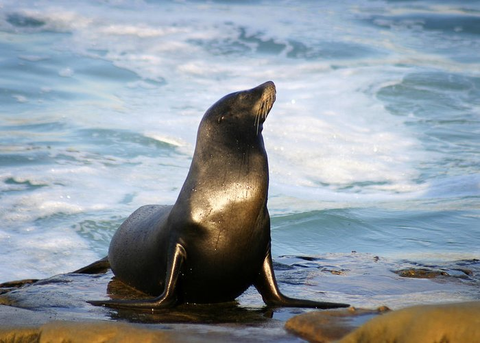 Sealion Greeting Card featuring the photograph Sealion by Anthony Jones