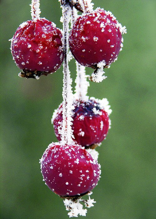 Berries Greeting Card featuring the photograph Seasonal Colors by Marilyn Hunt