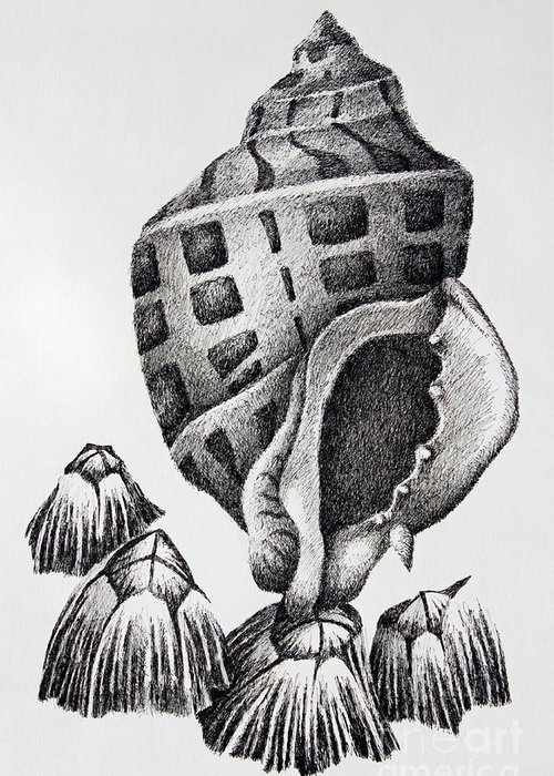 Seashell Print Greeting Card featuring the drawing Seashell And Barnacles by James Williamson