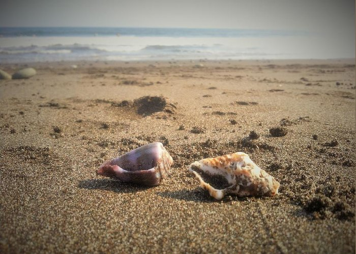 Beach Greeting Card featuring the photograph Seashells In The Sand by Stephanie Russell