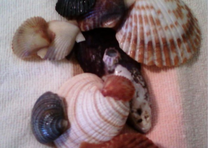 Seashells Greeting Card featuring the photograph Seashells by Jamey Balester