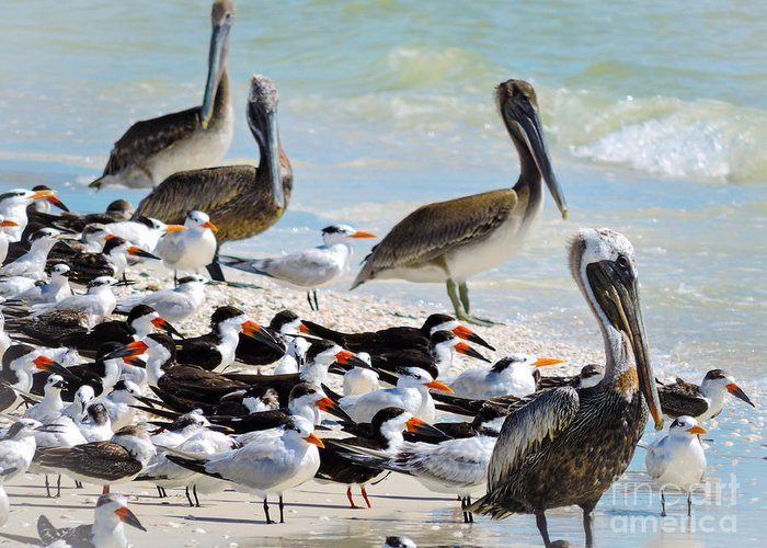 Pelicans Greeting Card featuring the photograph Seashore Gathering by Marilee Noland