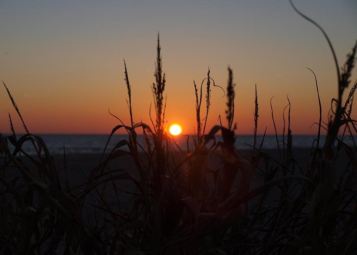 Sunset Greeting Card featuring the photograph Seaside Seagrass And Sunsets by Daralyn Spivey