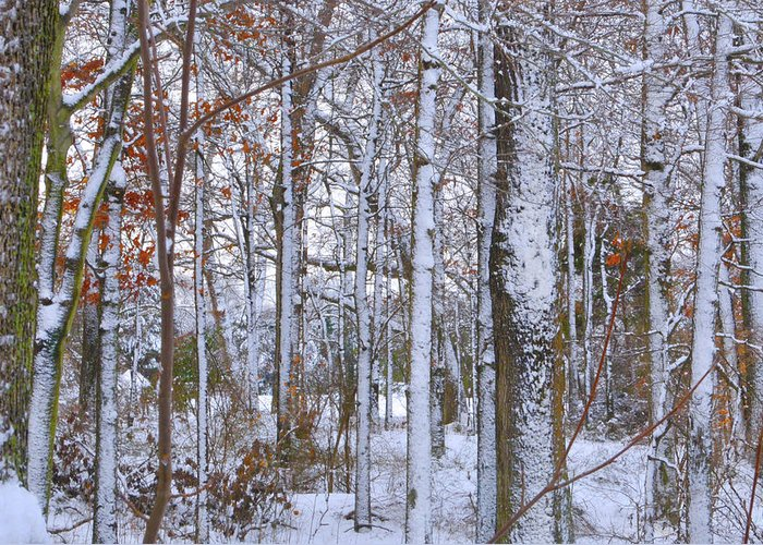 Fine Art Greeting Card featuring the photograph Season's First Snow by Gerlinde Keating - Galleria GK Keating Associates Inc