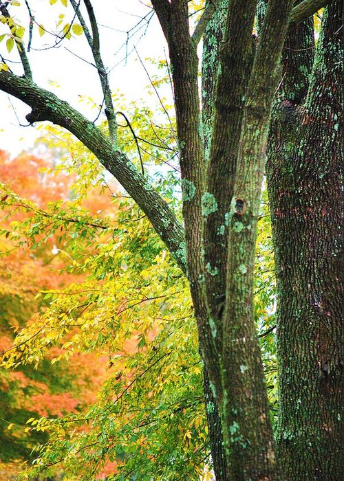 Trees Greeting Card featuring the photograph Seasons by Trudi Southerland