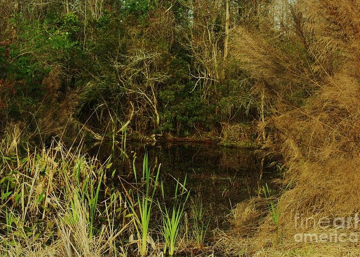 Pond Greeting Card featuring the photograph Secret Pond by Maria Young
