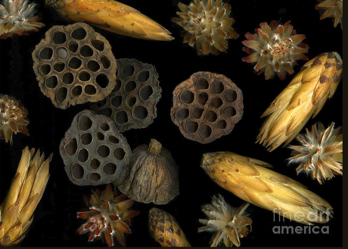Pods Greeting Card featuring the photograph Seeds And Pods by Christian Slanec