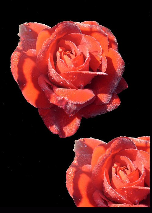 Redrose Greeting Card featuring the photograph Seeing Double by Shirley anne Dunne
