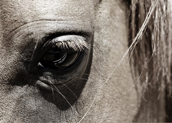 Americana Greeting Card featuring the photograph Stillness In The Eye Of A Horse by Marilyn Hunt