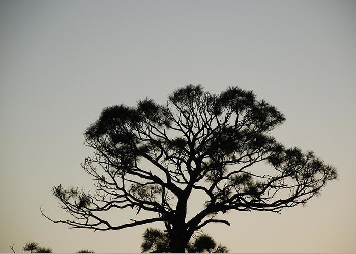 Tree Greeting Card featuring the photograph Senset Trees by Rob Hans