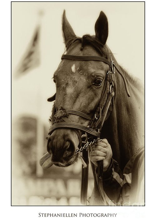 Horse Greeting Card featuring the photograph Sephia Racehorse by Stephanie Hayes