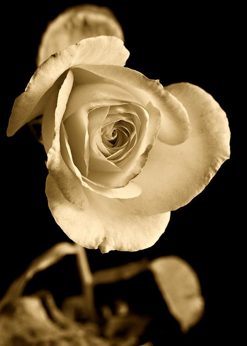 Rose Greeting Card featuring the photograph Sepia Antique Rose by M K Miller