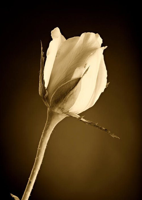 Rose Greeting Card featuring the photograph Sepia Rose Bud by M K Miller