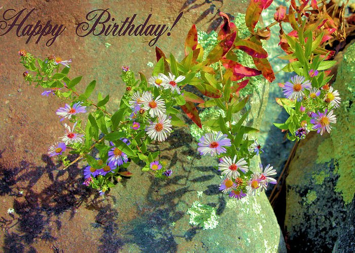 Happy Birthday Greeting Card featuring the photograph September Birthday Aster by Kristin Elmquist