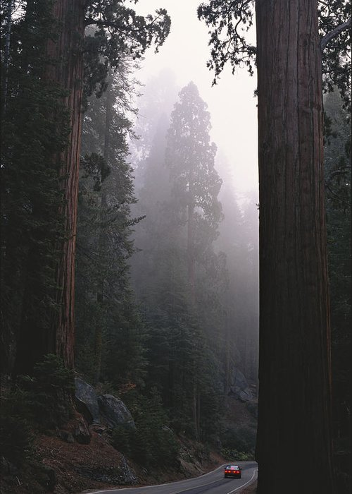 Plants Greeting Card featuring the photograph Sequoia Trees Dwarf A Car Traveling by Carsten Peter