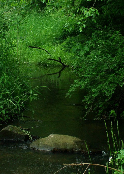 Stream Greeting Card featuring the photograph Serenity Reflection by Michelle BarlondSmith
